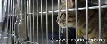 La SPCA propose des options pour limiter les abandons d'animaux durant la pandémie