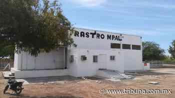 En Huatabampo mejoran los servicios del Rastro Municipal - TRIBUNA