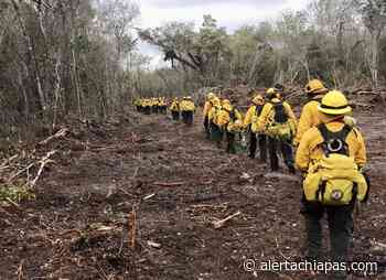 Chiapanecos Combaten Incendio En Bacalar - Alerta Chiapas