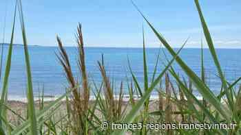 Antibes, Nice, Menton, Cannes... Presque toutes les plages des Alpes-Maritimes rouvrent ce week-end - France 3 Régions