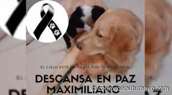 En Mocoa, sujeto apuñaló con sevicia a un canino causándole la muerte - Conexión Putumayo