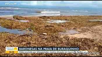 Baronesas se acumulam em areia de praia de Lauro de Freitas e alertam para sujeira - G1