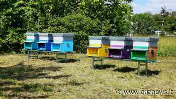Ieri la giornata mondiale delle api: l'Electrolux di Susegana riserva loro uno spazio verde e sei arnie - Qdpnews.it - notizie online dell'Alta Marca Trevigiana