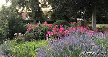 Kostenlose Blumensamen jetzt auch in Blomberger Tourist-Info | Lokale Nachrichten aus Blomberg - Lippische Landes-Zeitung