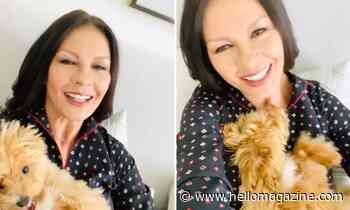 Catherine Zeta-Jones' cute puppy gives a tour of New York home - HELLO!