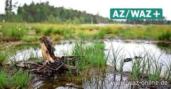 Großes Moor - Sassenburg will 810.000 Euro in den Hochwasserschutz investieren - Wolfsburger Allgemeine