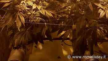 Selva Candida: una serra hi-tech per coltivare marijuana in casa