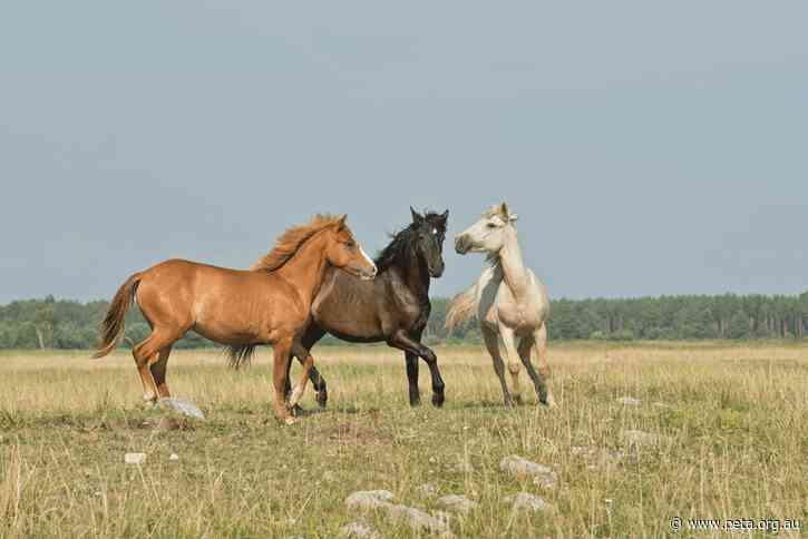 PETA Int'l Science Consortium–Funded Study: No Need to Bleed Horses to Treat Diphtheria