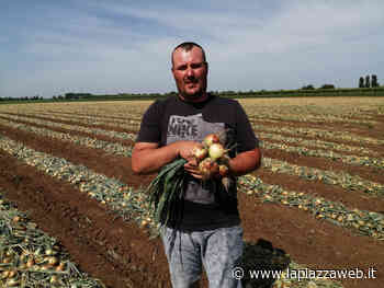 """Agricoltura: """"Il Coronavirus spinge in basso il prezzo dei prodotti"""" - La Piazza"""