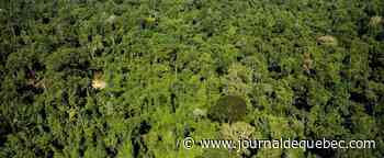 Les forêts tropicales pourraient relâcher du carbone avec le réchauffement climatique