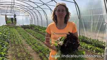 Estaires : Audrey change de vie pour cultiver des légumes bios - L'Indicateur des Flandres