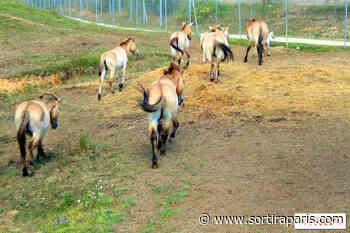 Zoo de Thoiry : la partie safari en voiture rouvre sans contact - sortiraparis