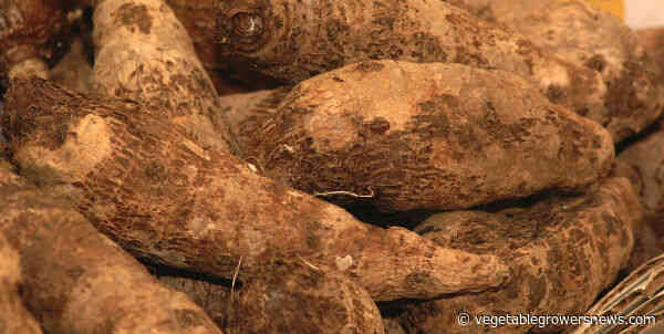 North Carolina SweetPotato growers anticipate no delays due to COVID-19