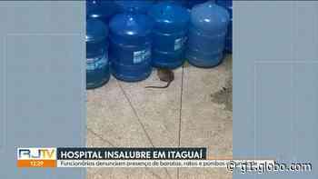 Imagens mostram rato, baratas e pombos no único hospital de Itaguaí, RJ - G1