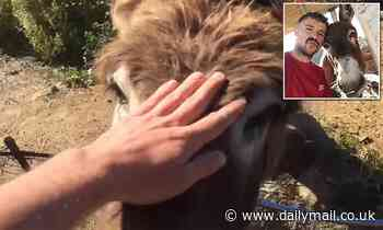 Heartwarming moment man and pet donkey cry as they are reunited following COVID-19 lockdown in Spain