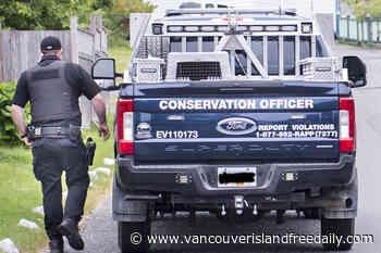 Food-conditioned black bear destroyed near Port Hardy - vancouverislandfreedaily.com