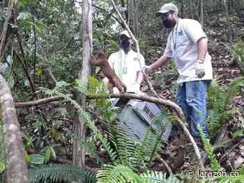 CVS liberó 41 ejemplares de fauna silvestre en Los Córdobas - LA RAZÓN.CO