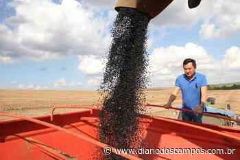 Diário dos Campos | Estiagem reduz produção de feijão em Ponta Grossa, mas alta no preço compensa - Diário dos Campos