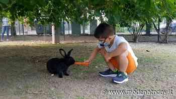 """Formigine, il """"Giardino dei Conigli"""" inaugura nel parco di Villa Gandini - ModenaToday"""
