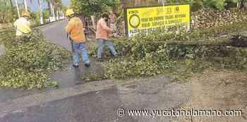 Lluvia y viento derriban árboles en Oxkutzcab – Yucatán a la mano - Yucatán a la mano