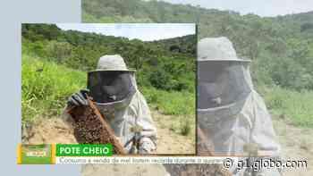 Paty do Alferes lidera produção de mel no estado do Rio, segundo Secretaria de Agricultura - G1
