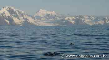 Os segredos da migração da baleia-franca-austral, uma espécie em recuperação - Engeplus