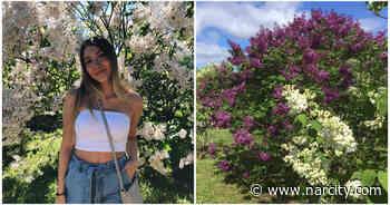 Ce vaste jardin de lilas est ouvert et se trouve à 2 heures de Québec - Narcity Québec