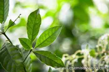 DMT – Dimethyltryptamine