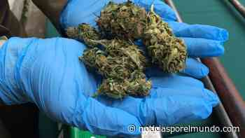 - Desbaratan una presunta organización criminal por tráfico de drogas en Linares - Noticias Chile - Noticias por el Mundo