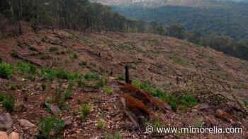 Asegura División Ambiental predio afectado por tala clandestina en Morelia - MiMorelia.com