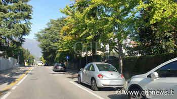 Continua l'abbattimento degli alberi nei viali di Vittorio Veneto: i dubbi di Legambiente vittoriese - Qdpnews.it - notizie online dell'Alta Marca Trevigiana