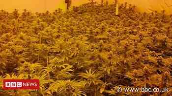 Cannabis plants 'worth more than £1m' seized in Oldham