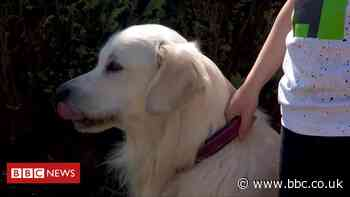 Coronavirus: Meet the school dog making home visits