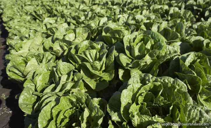 Leafy greens group responds to report identifying foodborne illness source