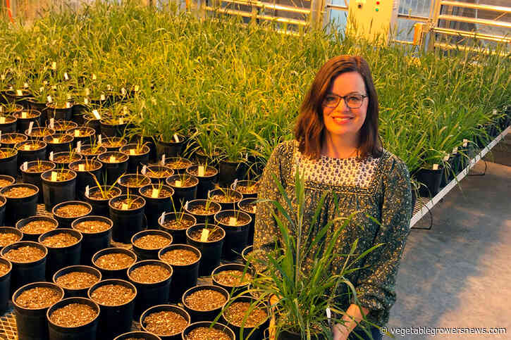Plant protein's role in cellular shape, drought survival pegged by scientists