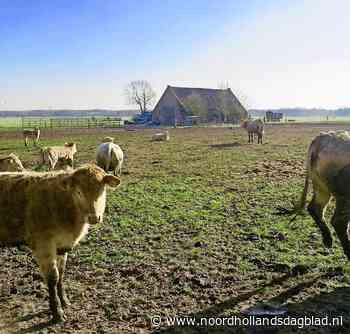 Soest schuift boerderijverplaatsing opnieuw voor zich uit, steeds bozer en wanhopiger wordende oppositie belooft interpellatie; 'Deze ellende móet echt afgelopen zijn!' - Noordhollands Dagblad