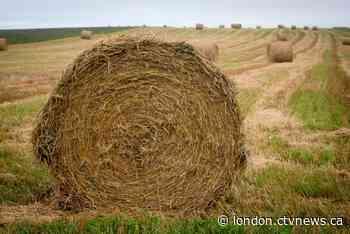 Falling straw bale kills Milverton, Ont. man - CTV News