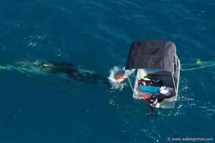 Australian Man Facing Fine After Rescuing Whale Trapped in Government Shark Nets