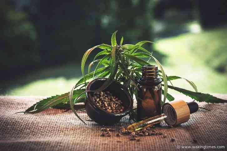 Hemp Is Economically And Environmentally Sustainable