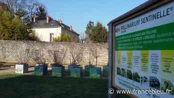 Allergies au pollen : la Mayenne en vigilance orange pour les graminées - France Bleu
