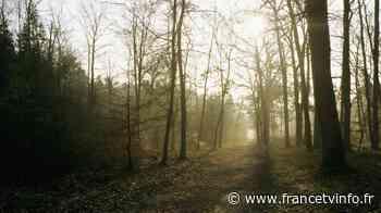 Déconfinement : la foule de retour à la forêt de Fontainebleau - Franceinfo
