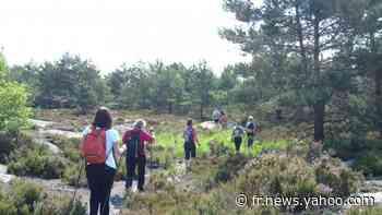 """Déconfinement : le personnel de la forêt de Fontainebleau s'attend """"à recevoir beaucoup de monde"""" et constate déjà des masques abandonnés - Yahoo Actualités"""