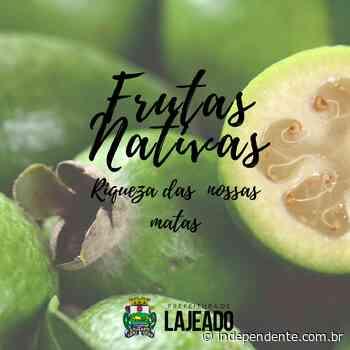 Secretaria do Meio Ambiente de Lajeado lança cartilha sobre frutas nativas - independente