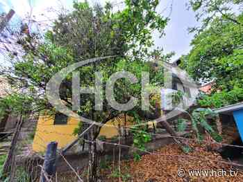 Rayo derribó árbol en col. Monte Carmelo - hch.tv