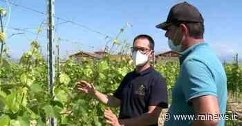 Peschiera del Garda (VR): dal volante alle vigne - TGR Veneto - TGR – Rai
