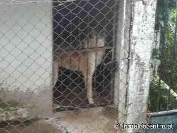 Resende: autarca estranha denúncias de animais alojados com más condições - Jornal do Centro