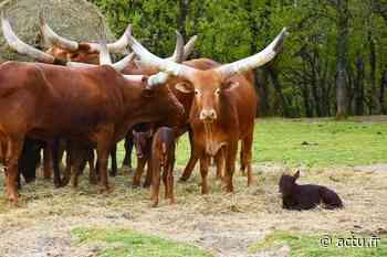 Près de Toulouse. Le Zoo African Safari de Plaisance-du-Touch rouvre ses portes au public - actu.fr