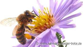 Enzkreis: Bienenseuche greift weiter um sich - Schwarzwälder Bote
