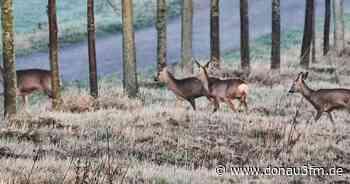 Außergewöhnlich viele Wildunfälle in Krumbach | DONAU 3 FM - DONAU 3 FM
