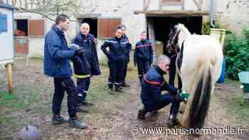 EN IMAGES. À Gisors, ces sapeurs-pompiers sont les anges gardiens des animaux ! - Paris-Normandie